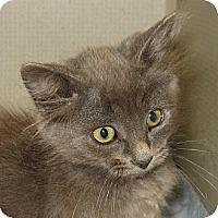 Adopt A Pet :: ZEPPELIN - 2013 - Hamilton, NJ