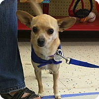 Adopt A Pet :: Ozzie - Scottsdale, AZ