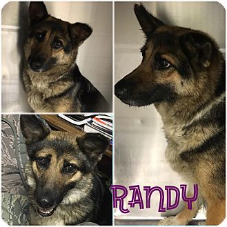 German Shepherd Dog/German Shepherd Dog Mix Dog for adoption in Fort Valley, Georgia - Randy