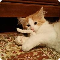 Adopt A Pet :: GEORGE - Des Moines, IA