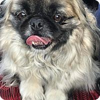 Adopt A Pet :: Okie - Tijeras, NM