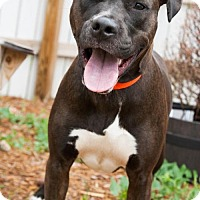 Adopt A Pet :: Diva-Dee - Independence, MO