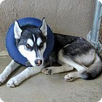 Adopt A Pet :: Charleen - Mission Viejo, CA