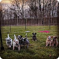 Adopt A Pet :: Potter Litter Group - Garden City, NY