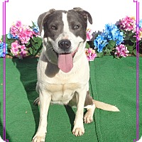 Adopt A Pet :: PRINCESS see also RAYITO - Marietta, GA