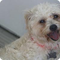 Adopt A Pet :: April Rose - Bedminster, NJ