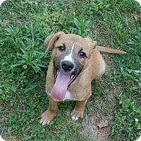 Adopt A Pet :: Leon - Ashburn, VA