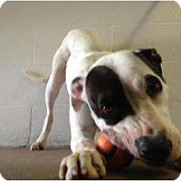 Adopt A Pet :: Esther - Winter Haven, FL