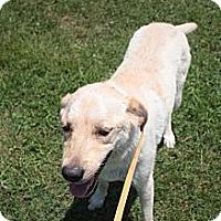 Adopt A Pet :: Lady - Stilwell, OK