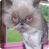 Adopt A Pet :: Max - Columbus, OH