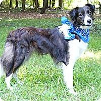 Adopt A Pet :: Brooke - Mocksville, NC