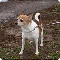 Adopt A Pet :: Winnie - Toronto/Etobicoke/GTA, ON