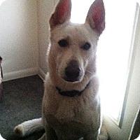 Adopt A Pet :: Kaiser - Evergreen Park, IL
