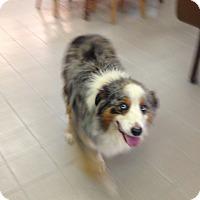 Adopt A Pet :: Eastwood~Prison Obedience Trai - Hazard, KY