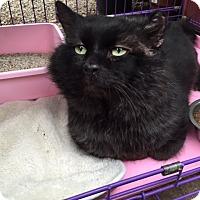 Adopt A Pet :: Gardiner - Bedford, MA