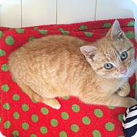 Adopt A Pet :: Kyle - Chesterfield Township, MI