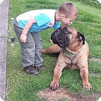Adopt A Pet :: Max - Roy, WA