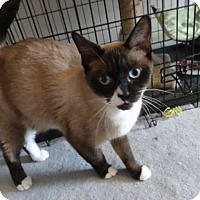 Adopt A Pet :: TZ - Colmar, PA