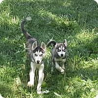 Adopt A Pet :: Harry - Antioch, IL