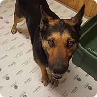 Adopt A Pet :: JESSE - Winnipeg, MB