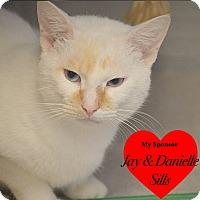 Adopt A Pet :: Dante - San Leon, TX