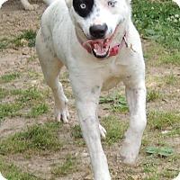 Adopt A Pet :: rachel - Joplin, MO