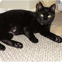 Adopt A Pet :: Raven & Midnight - Barnegat, NJ