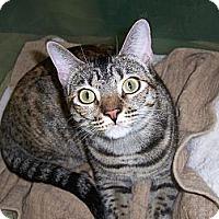 Adopt A Pet :: Fango - College Station, TX