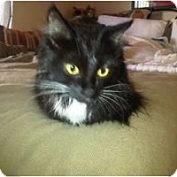 Adopt A Pet :: Lilly - lake elsinore, CA