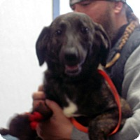 Adopt A Pet :: Bracelet - Greencastle, NC