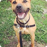 Adopt A Pet :: Coco - Oak Park, IL
