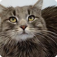 Adopt A Pet :: Narcissa - Chicago, IL