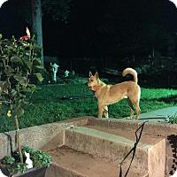 Adopt A Pet :: Jasper (fostered in GA) - Cranston, RI
