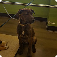 Adopt A Pet :: Mallory - Blue Bell, PA