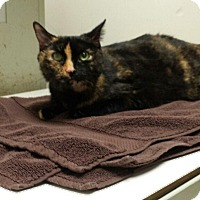 Adopt A Pet :: Marbles - New Albany, OH