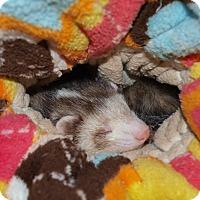 Adopt A Pet :: Finn - Acworth, GA