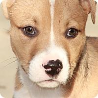 Adopt A Pet :: Dunlop - Tomball, TX
