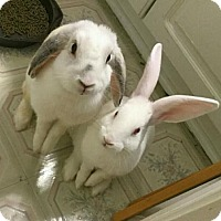 Adopt A Pet :: Rudy & Buttercup (pending) - Baton Rouge, LA