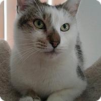 Adopt A Pet :: Navidad - Winchester, CA