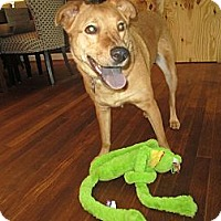 Adopt A Pet :: Lucy Lu - Alexandria, VA