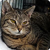 Adopt A Pet :: Rebecca - Brooklyn, NY