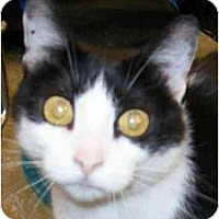 Adopt A Pet :: Felicity - Annapolis, MD