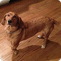 Adopt A Pet :: Molly - Schererville, IN