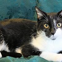 Adopt A Pet :: Nikki - Greensboro, NC