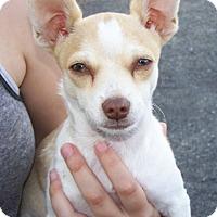 Adopt A Pet :: TK - Kirkland, WA