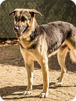 German Shepherd Dog Mix Dog for adoption in Phoenix, Arizona - Jinxie