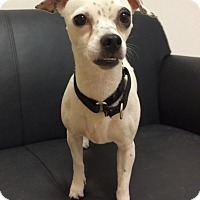 Adopt A Pet :: Carion - Mission Viejo, CA