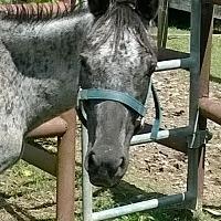 Adopt A Pet :: Artemis - Hitchcock, TX