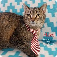 Adopt A Pet :: Hazel - Bucyrus, OH