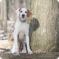 Adopt A Pet :: Samanah - Drumbo, ON
